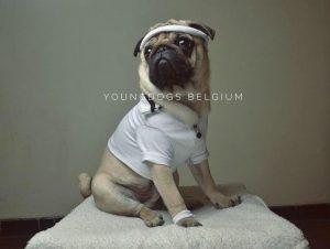 YoungDogs Belgium
