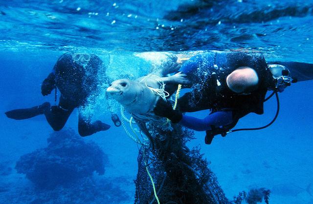 Plastic afval sterfte zeedieren