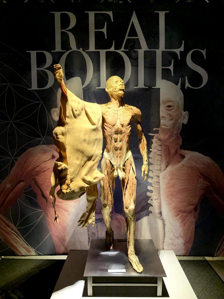lichaam dat vel draagt op de tentoonstelling Real bodies.